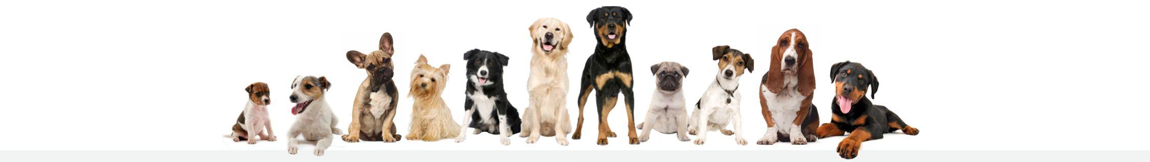 Dog Walking Bovey Tracey, Ogwell, Newton Abbot, Kingsteignton